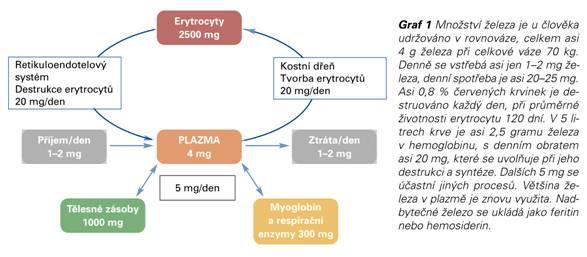 Papilom chirurg. Account Options Hpv virus lecba u zen